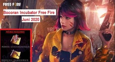 Bocoran Incubator FF Juni 2020